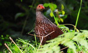 Virunga Birding