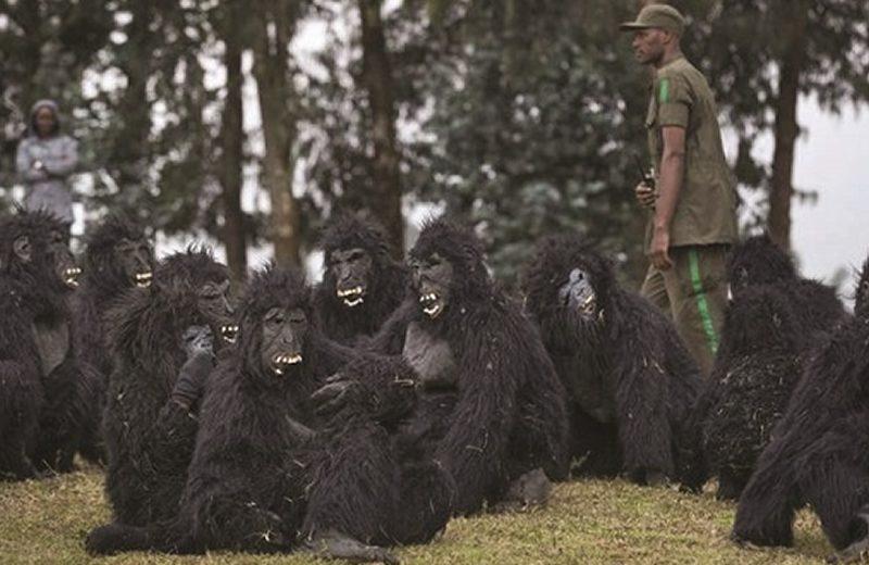 Rwanda Preps for Gorilla Naming