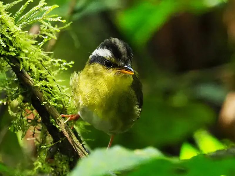 Top 5 Best Birding Destinations in Rwanda