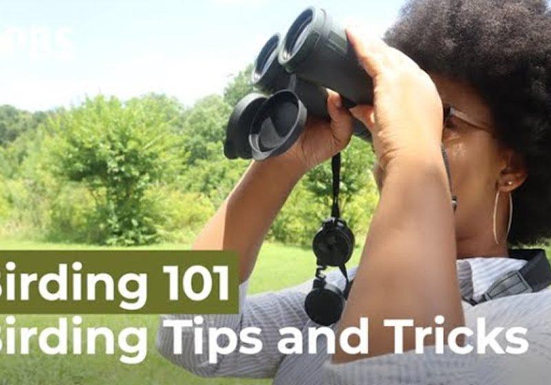 10 Birding Tips for Beginners
