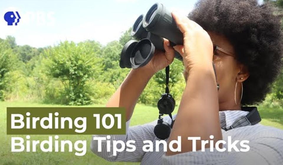 Birding Tips