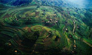 Rwanda Terraced Hills