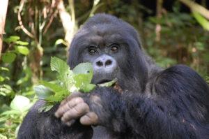 adventure rwanda gorillas